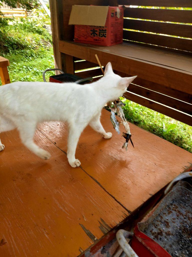 仁王尊プラザ塩焼き泥棒猫